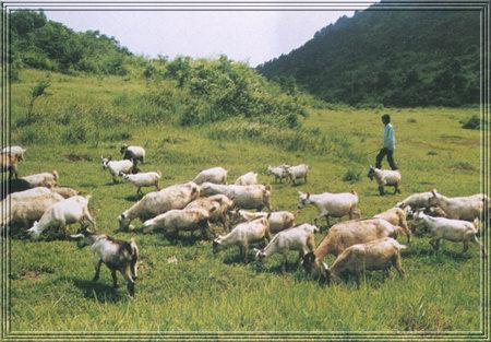 农村养殖业_畜牧养殖业